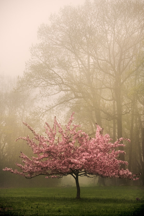 light-airy:  Crabapple Tree (via Durham Portfolio)