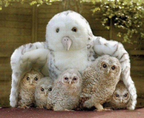 mother of owls