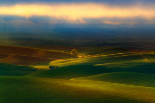 simplynorule:  Surreal Morning In The Palouse (by kevin mcneal)
