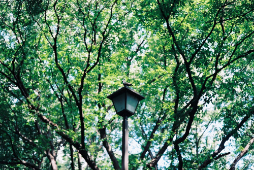 youwillfindcallum:  a bird on the light @Ueno Tokyo (by ogino.taro)