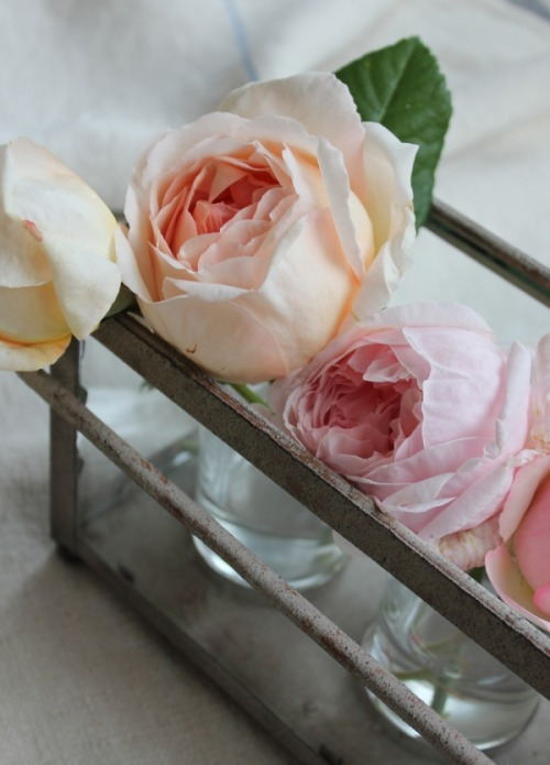 source: Trouvais ~ gorgeous pink roses from a gorgeous blog