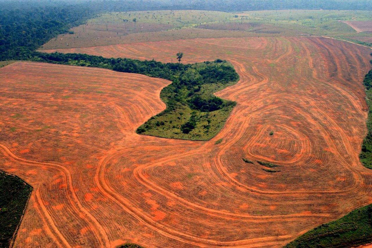 Brazilian Sugarcane Deforestation
