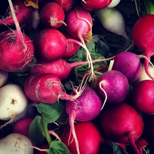 lovagemetender:  Bill maxwell's custom easter egg radish mix @unsqgreenmarket (Taken with instagram)