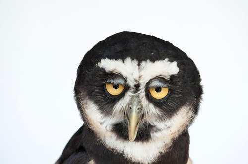 theanimalblog:  Photograph: Joel Sartore/National Geographic Stock/Caters