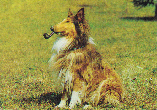 Collie with Pipe by whinendine on Flickr.