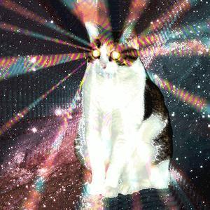 My Podcast - Love Cats in Infinite Space