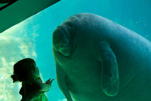 "fek:  journalofajournalist:  Girl meets manatee. Pic via Christopher Wright of CMGW Photography. (via First Contact | Colossal)  ""Crack Spirit Guide.""  This looks like a comic book panel in the best way."