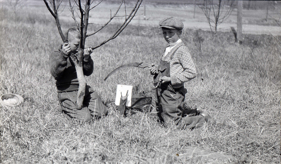Grafting: The Secret to ApplesApples were one of the first domesticated fruits. But they don't make it easy on would-be growers. Just like us, apples create offspring that differ, often dramatically, from their parents. Every seed inside an apple contains the genetic material for an entirely new kind of apple so each generation looks and tastes different. The only way to get the same type of apple is through grafting. Grafting is an ancient technique of inserting the shoot or bud of one plant into the stem or trunk of another. Without grafting, every apple in the world would be its own distinct variety! We know that humans have been grafting apples for more than 3,000 years.Here, two boys in New Berlin, Wisconsin show grafts placed on the cut stump of an apple tree. Hopefully, their mothers are keeping a close eye on that big blade! via: New Berlin Historical Society
