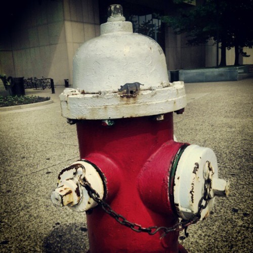 Safari…FIRE..hydrant (Taken with instagram)