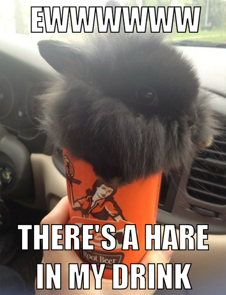 tastefullyoffensive:  [via]  Drew, I think that's a rabbit, not a hare. They aren't even the same genus.
