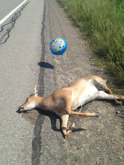 tumboner:  laughing at a picture of a dead deer on the internet is this what my life has come to