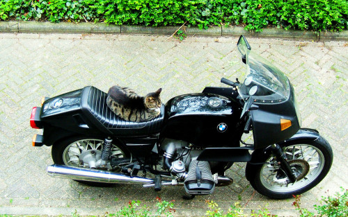get off of there cat. your not part of a motorcycle gang. you don't even have a motorcycle license.