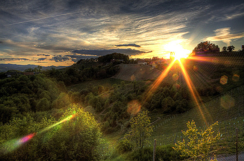lensblr-network:  sun going down in the vineyards Photo by skyfreezer.tumblr.com