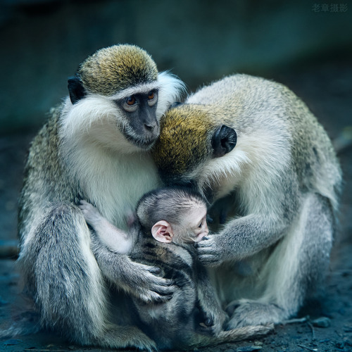 "magicalnaturetour:   ""Baby, don't talk to stranger"" by Michael Zhang :)"