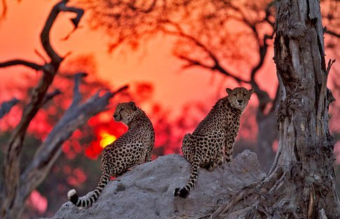 "earth-song:  ""Kwando Sunset"" by Marius Coetzee"
