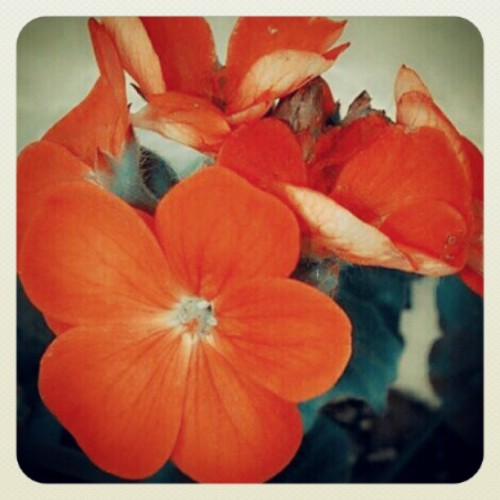 Flowers!! (Taken with instagram)