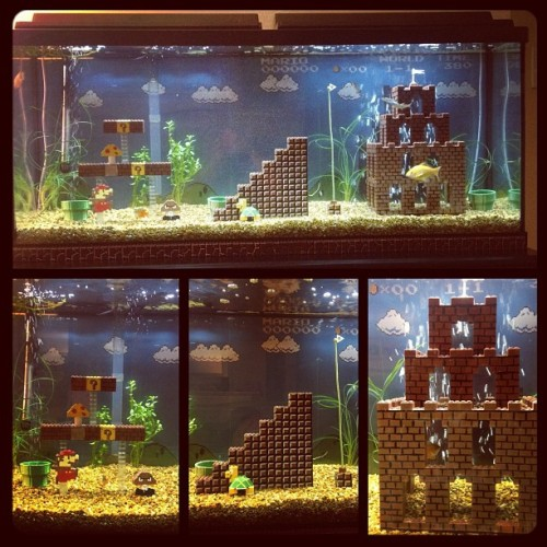 My roommate is freaking amazing. Here's his new fish tank! (w/ @cedrickusf ) (Taken with instagram)