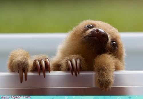baby sloth reflecting upon life
