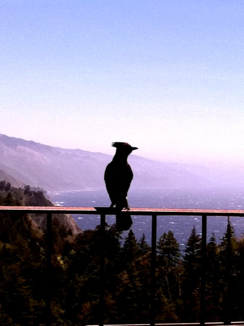 Lunch companion, Big Sur.  Photo: 5/23/12. Karen Glosser.