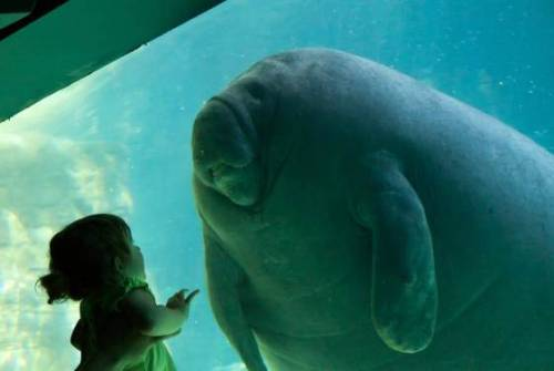 sitko:  Somedays I'm the girl… Somedays I'm the manatee.