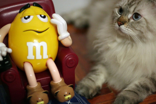 worldlyanimals:  Latte and Yellow M&M (~Kenny)