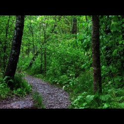 Took a walk down the trail in the woods today #woods #trail #green #nature #tree #leaves #leaf #trees #wood #duluth #duluthmn #minnesota #natural #photo #photograph #filter #edit (Taken with instagram)