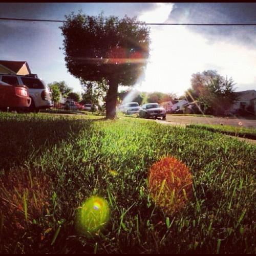 #grass #tree #hedge #green #yard #summer #sun #sunlight #bright #street #day #sky #blue #angle #instagood #instamood  (Taken with instagram)