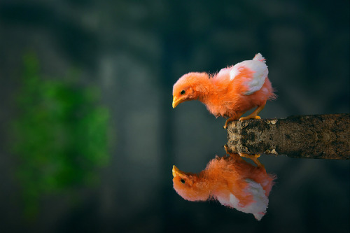 llbwwb:  My Reflections! by Muhammad Buchari