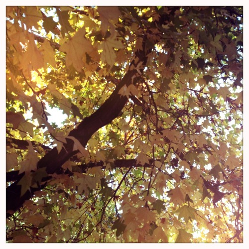 Autum Chunky Lens, Blanko Film, No Flash, Taken with Hipstamatic