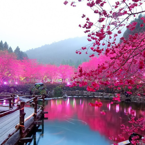 homedesigning:  Cherry Blossom Lake  Sakura Japan  sakura waters …