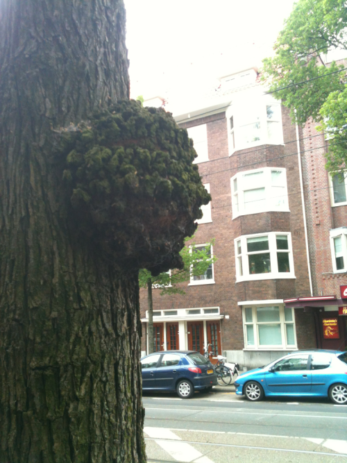 portrait of a tree overlookig the Heemstedestraat