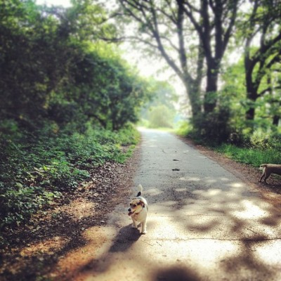 Bit cooler this morning. Nice. #jackrussell #walkies #sunshine #hampsteadheath #dog #ilovemyjackrussell #london  (Taken with Instagram at Parliament Hill Fields)