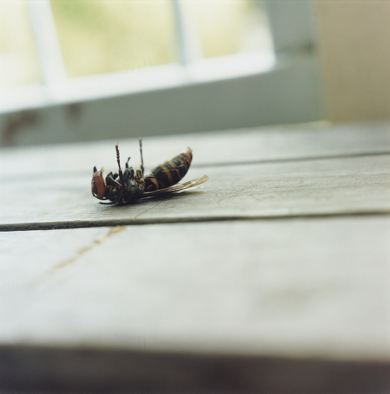 From Christie's London Photographs Sale (May 16, 2012):  Lot 100: Rinko Kawauchi, Untitled, from the series Utanane, 2001, chromogenic print, ed of 6, flush-mounted on aludibond, signed in ink on a gallery label with printed credit, title, date and number '5/6' (flush mount, verso), image/flush mount: 40 x 40 in (101.5 x 101.5 cm). Est. £4,000-6,000, sold £3,750. (c) Rinko Kawauchi Courtesy Christie's Images Ltd 2012.