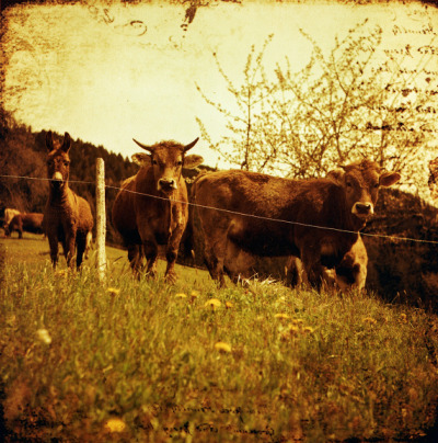 lomographicsociety:  Lomography Film of the Day - Lomography Redscale XR 50-200 (120)