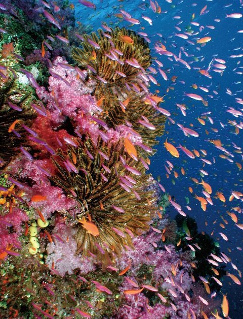"Under the sea of FIJI. It looks like a scene of ""FINDKING NEMO"" !"