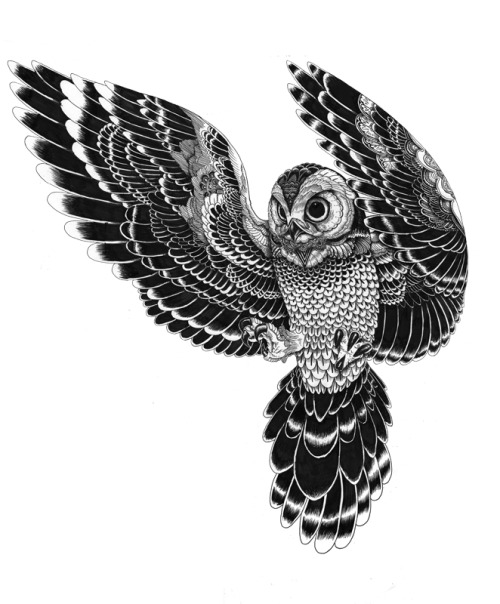 iainmacarthur:  owl in flight ink (2012) by Iain Macarthur
