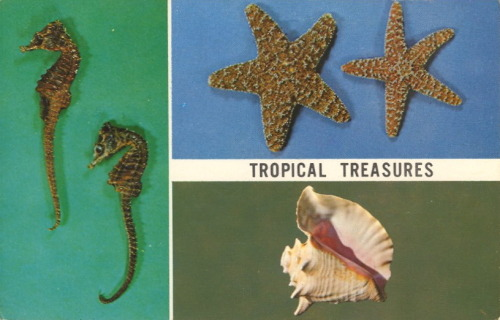 bad-postcards:  TROPICAL TREASURES  The SEAHORSE, STARFISH and CONCH are favorites of all shell collectors