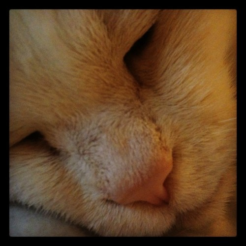 sleepy #cat is sleepy (Taken with instagram)