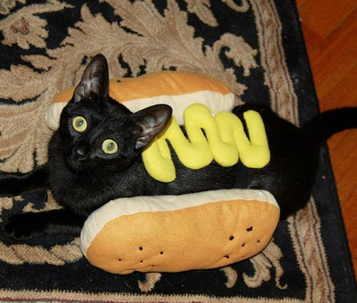 It's not every day you get a cat dressed in a hot dog costume. This little cat decided to step outside the box with her choice.