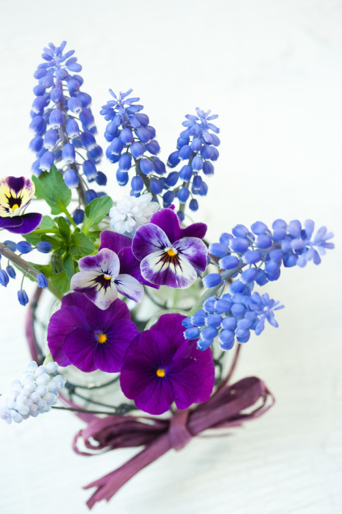 Muscari (by mellow_stuff)
