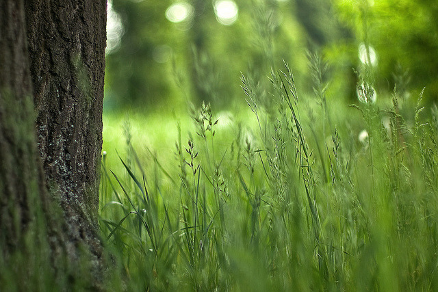 untitled by ~janne on Flickr.