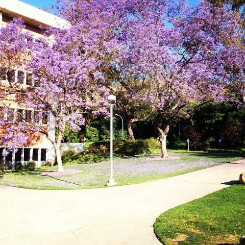 So much purple. #cpp #building8 (Taken with instagram)