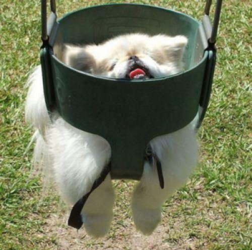 collegehumor:  Dog Stuck in Swing Help me! I'm drowning in swing.  lol   his face be squished