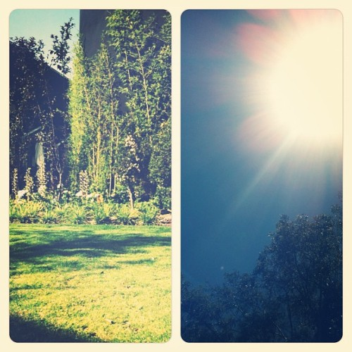 Up and down. #sun #garden #tan #earth #sky #grass #plants #nature #light #summer #vacation #chill #plant  (Taken with instagram)