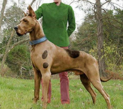 "collegehumor:  Scooby Doo IRL ""Wait a minute, this is photoshopped."" ""That's right, and I would've gotten away with it too, if it weren't for you meddling kids."""