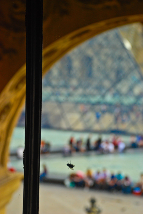 Parisian Fly at the Louvre: by Adeo