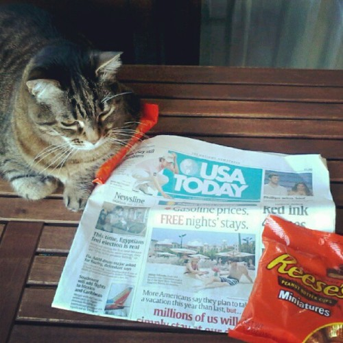 Lizzy won't let go of MY #Reeses  (Taken with instagram)