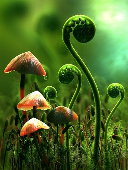 eyesnheart:  Mushrooms and Fern fronds by ~syah-mj