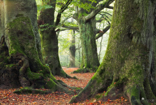 natures-garden:  Also keen on Tol? by *LarsVanDeGoor