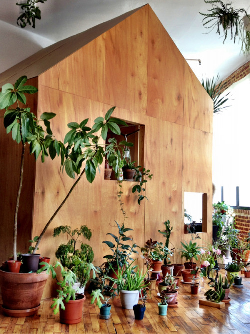 All Of Our Houseplants, 2012